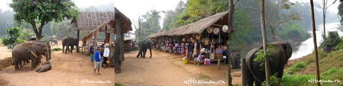 CHIANG MAI NORTH THAILAND HOTELS HOSTELS RESORTS BUNGALOWS_ ����� ��� ���� ��� �������� �������_maepingelephant