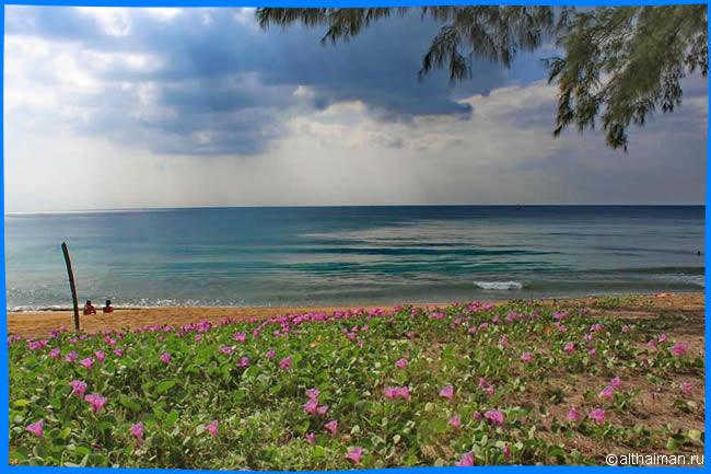 Пляж Май Као описание фото контакты гиды экскурсии