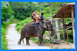Phangan Safari & Elephant Trekking